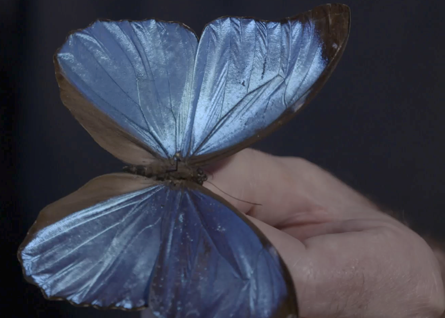 papillons idiudc